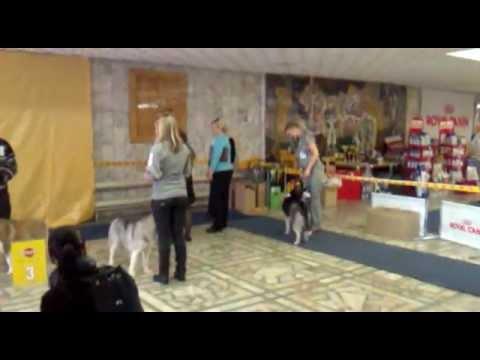 VLOG: АЛТАЙ / ПИТОМНИК ХАСКИ / 2 ЧАСТЬ - YouTube