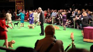 Best Of | Victoria Stilwell at the Westminster Dog Show