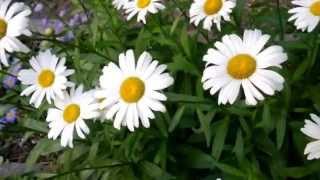 Sans-Souci, Polka, Op. 178  Johann Strauss II mp3