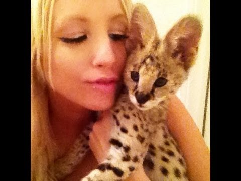 Baby Serval Sounds