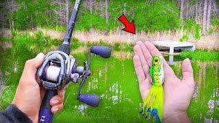 Catching GIANT Bass w/ FROGS! (Bank Fishing)