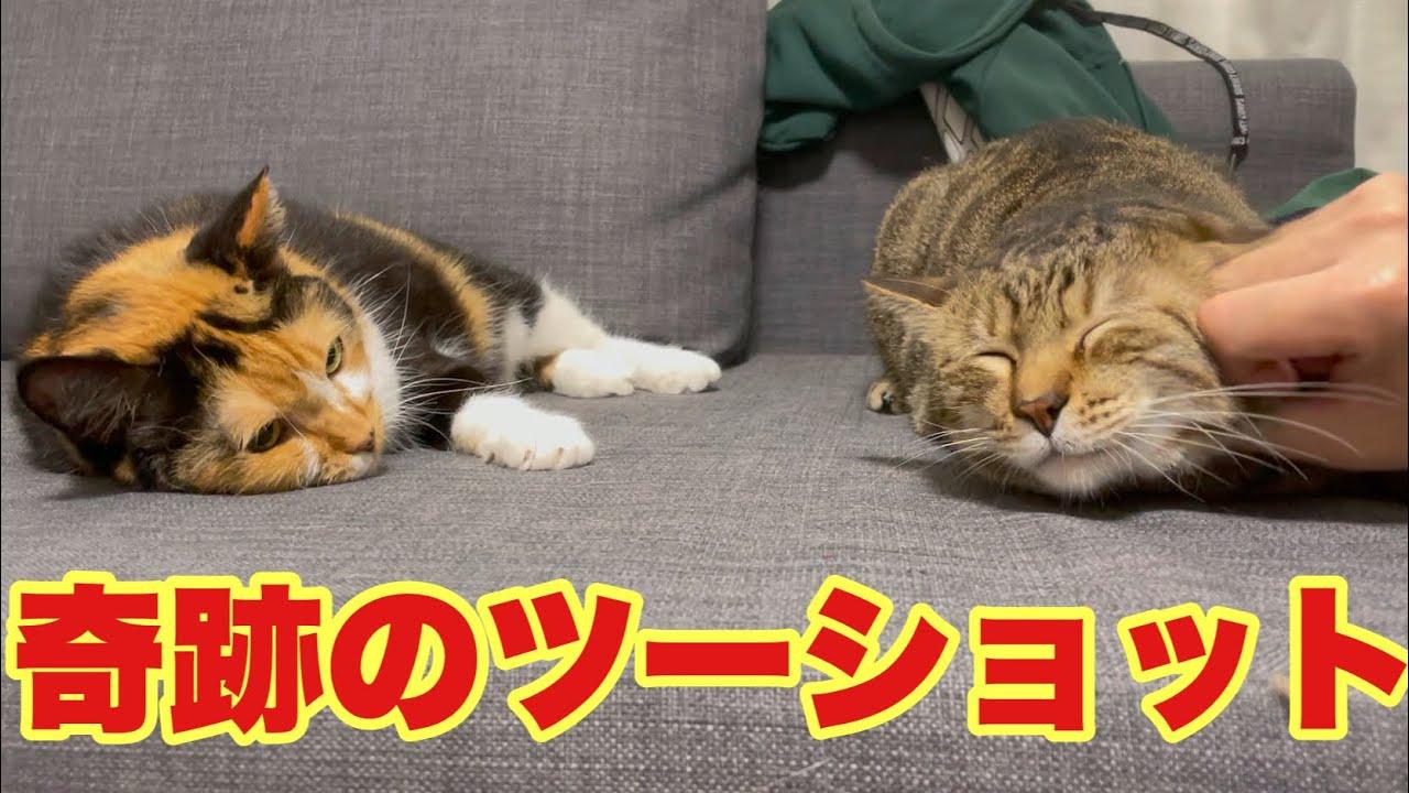 仲の悪い猫達が初めて並んで寝ました!
