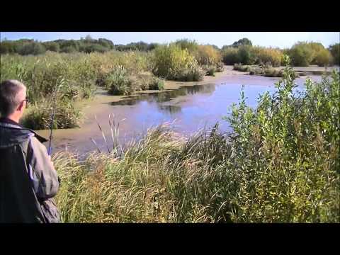 Щука, лягушка, рыбалка часть 2 применение приманки