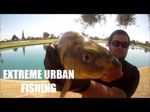 Fishing Dobson Ranch Lake  Mesa, Arizona