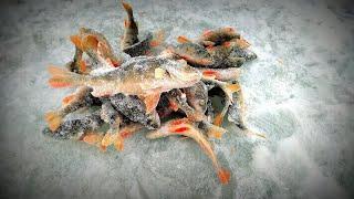 Окунь на безмотылку Рыбалка на озере со льда Отличная в Новосибирске