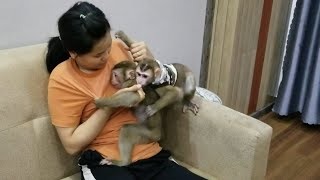 Monkey Baby Nui   Today the BON family came to NUI