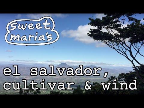 Video Travelogue: El Salvador, Cultivar, and Wind!