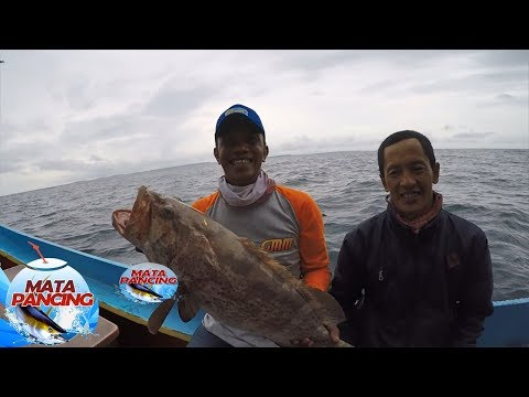 Spot Pertama Langsung Strike..Fish On Kerapu Macan! - Mata Pancing (6/6)
