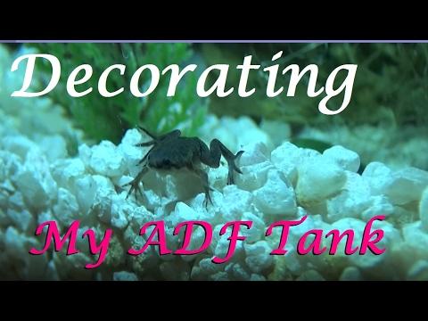 Decorating my African Dwarf Frog Tank    PARTIAL SETUP