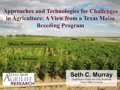 Plant Breeding Approaches and Technologies: A View from a Texas Maize Breeding Program