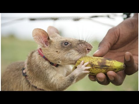 Developing skill in animal farming reduces unemployment
