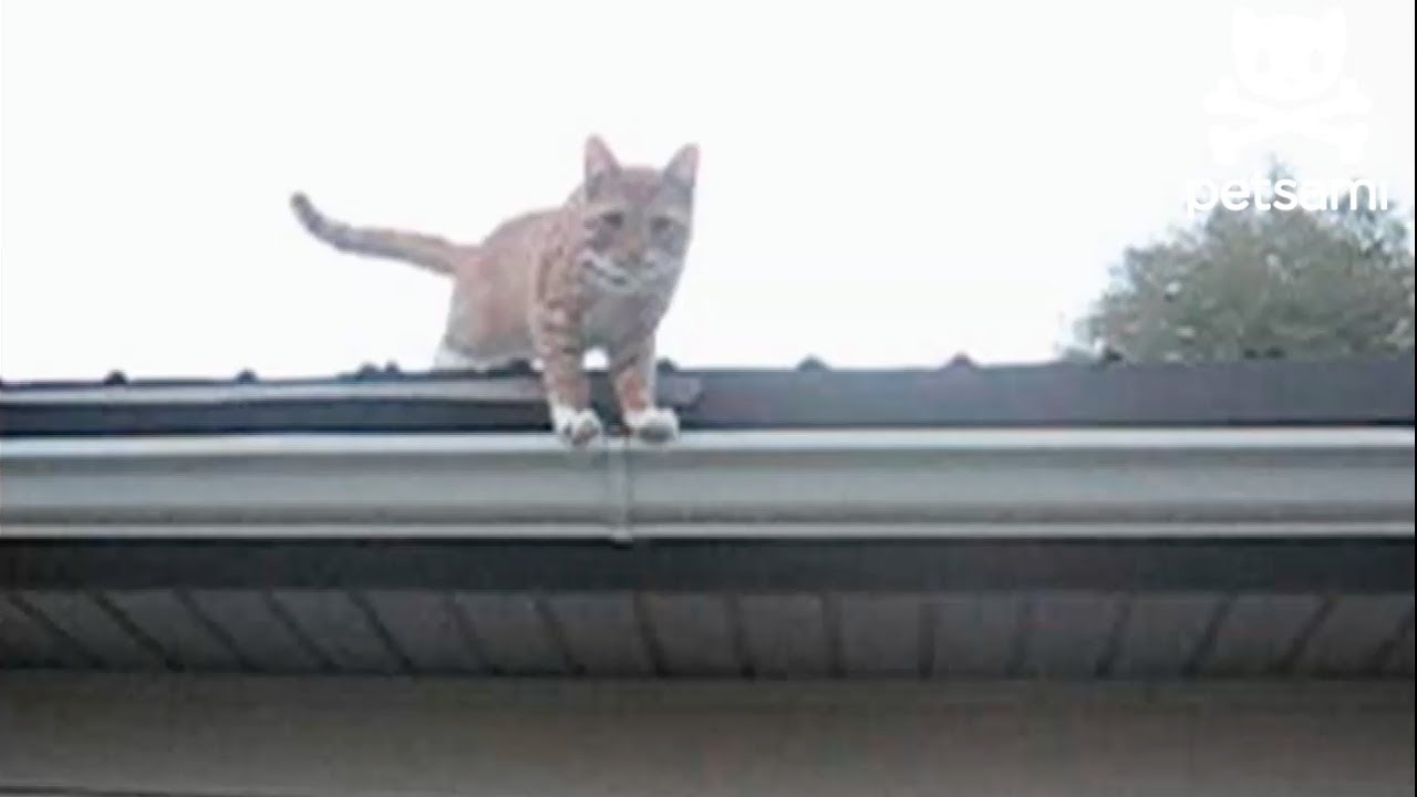 Cat Falls Off Roof And Lands Perfectly On All Feet Youtube