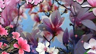 Посмотрите как магнолии цветут!