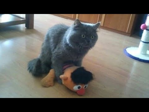 I WILL SELL my kidney if you don't laugh - World's Funniest CAT compilation