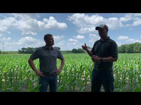 Fungicide on Corn