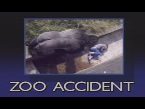 Gorila protegió a un nene que quedó inconciente en su jaula