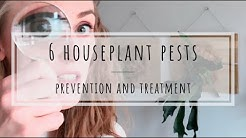 Houseplant pests: treating aphids, mealybugs, scale, thrips, whiteflies, and spider mites