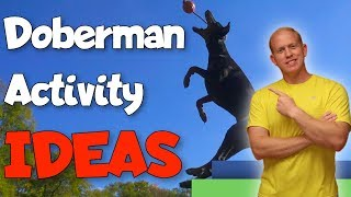 How Much Exercise Does a Doberman REALLY Need? Fun Activity Ideas