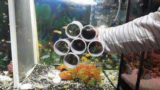 DAMIZLIK CİKLET AKVARYUMU NASIL OLMALI, akvaryum balıkları, ciklet akvaryumu ve ciklet türleri