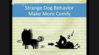 Strange Dog Behaviour - Circle Before Laying Down (3 Of 5)
