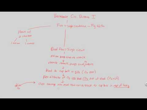 Circulation - Vertebrate Circulatory Patterns I