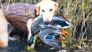 Duck Hunting the Migration in Nebraska 2016