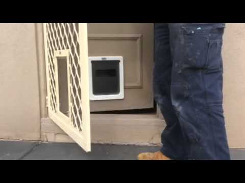 Training To Use The Dog Door Through The Screen And Wooden Door By