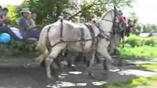 молодые в повозке с лошадьми