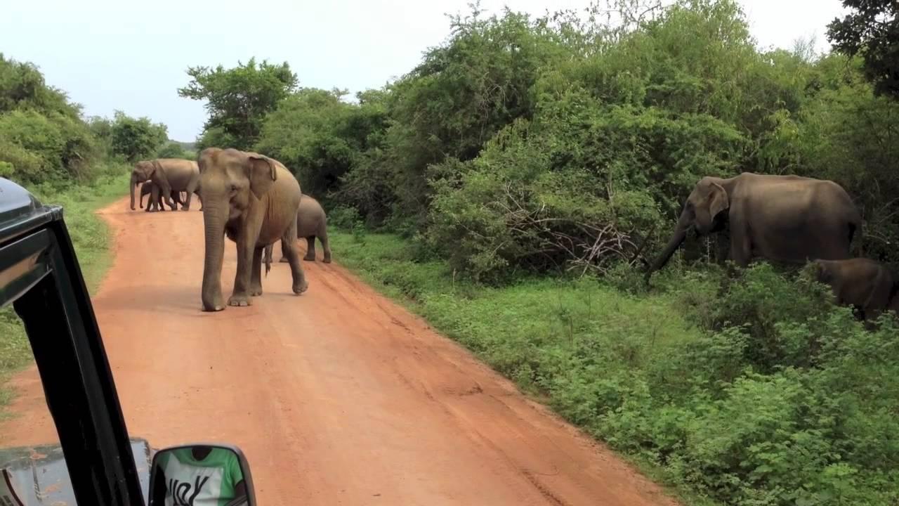Yala Safari Sri Lanka Dec 2013 By Lava Flo Youtube
