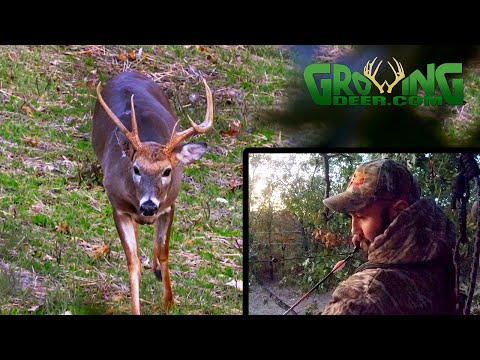 Hunting The Pre-Rut When Anything Can Happen! Like Tagging An Old Ozark Mountain Buck!
