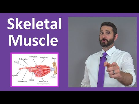 Skeletal Muscle Tissue: Contraction, Sarcomere, Myofibril Anatomy Myology
