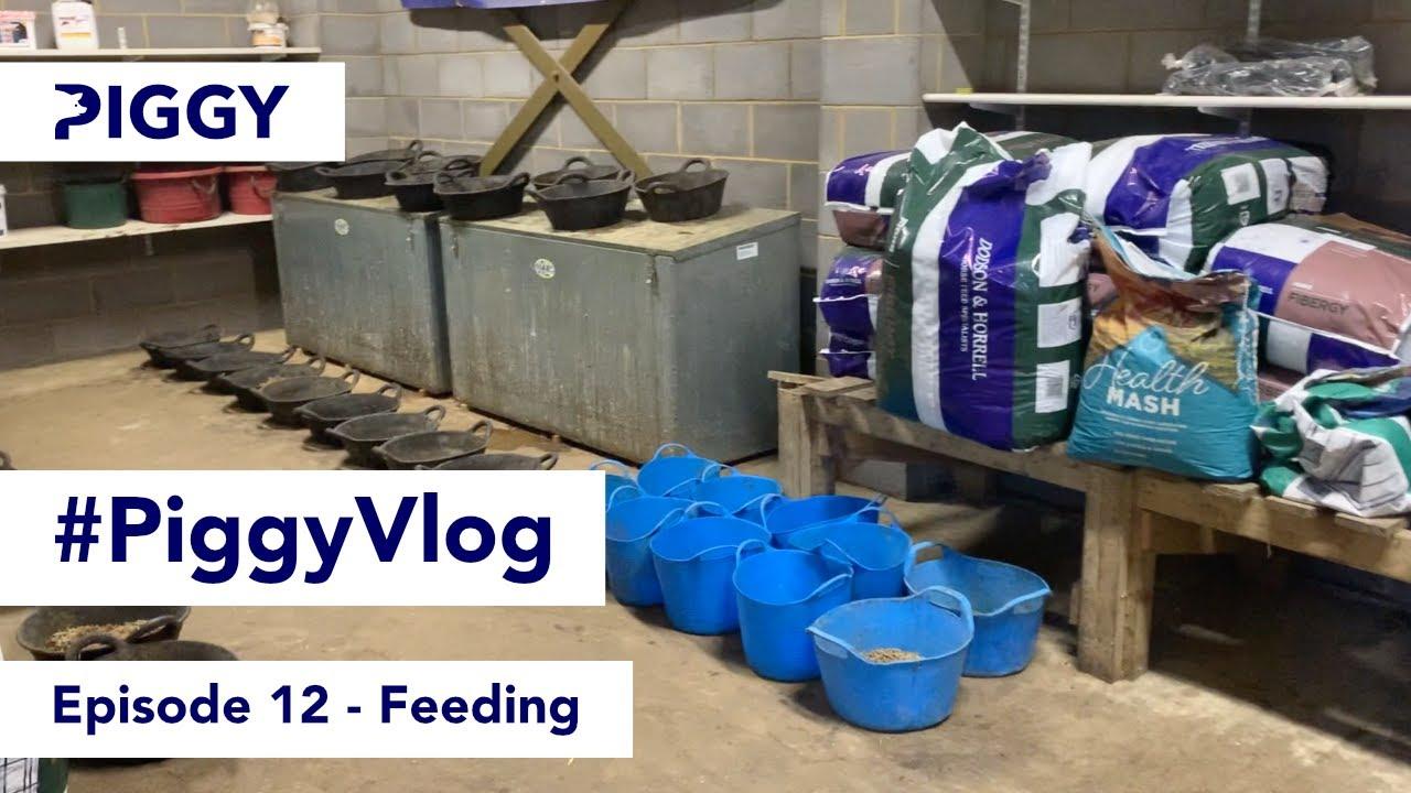 Feeding   Episode 12   #PiggyVlog 2021