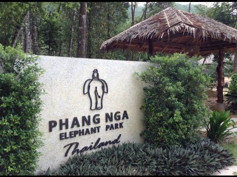 A day in the life of Phang Nga Elephant Park
