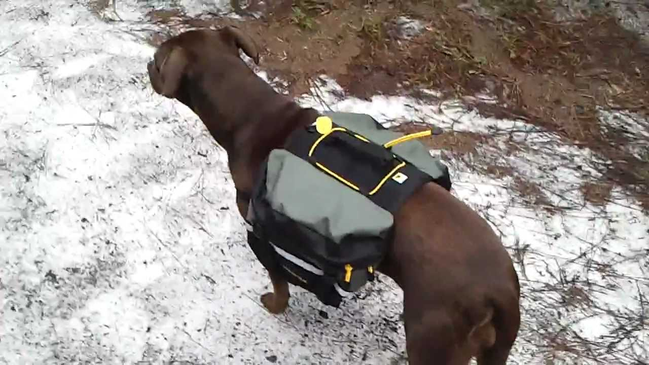 Mountainsmith Dog Backpack - YouTube