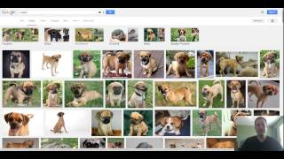 What Is A Puggle - Puggle Temperament - Is This The Right Dog For Me?