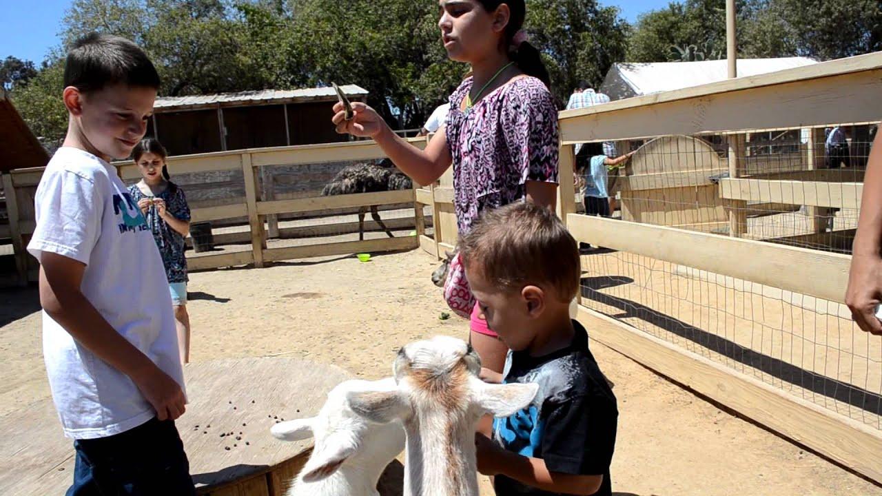 San Juan Capistrano Petting Zoo 2 Youtube