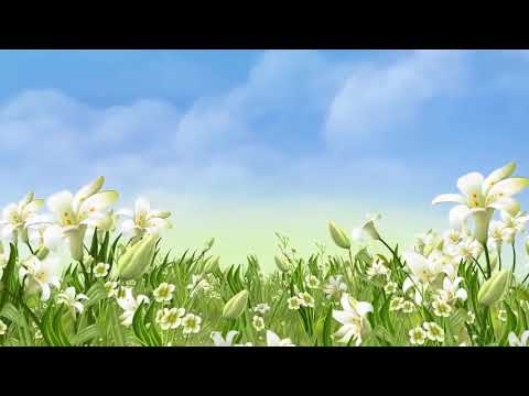 Footage HD video,HD Video Background Animation Video Backgrounds Motion, Backgrounds For Video40   C