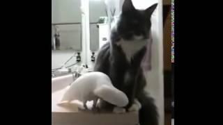 Приколы видео животные смотреть бесплатно