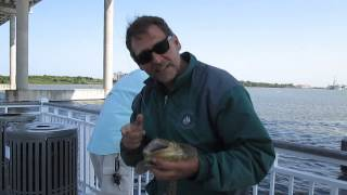 Jiggin Jerry, Fishing at The Mt Pleasant Pier Through April