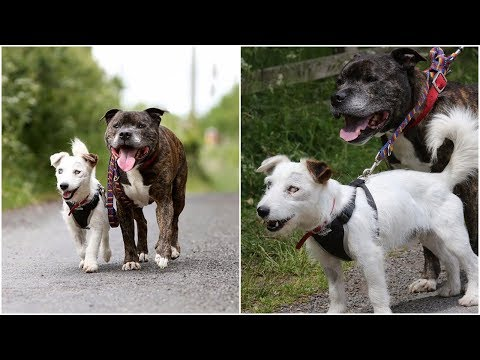 Two stray dogs wish to find a new home one of them is blind the other is his own eyes