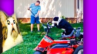 Funniest Dogs And Cats Awesome Funny Pet Animals Life Videos 2019