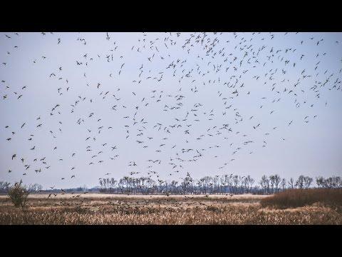 Waterfowl Hunting: