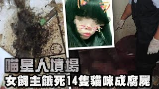 慘!喵星人墳場 14貓遭餓死成腐屍 | 台灣蘋果日報
