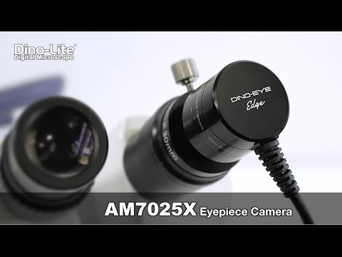 Dino-Eye: AM7025X Edge Series 5MP Eyepiece Camera