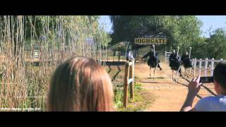 «Энергия Связного» в Южной Африке(Энергия - это впечатления! Покатушки на страусах, дикие пингвины и полет над Кейптауном - участников Второй..., 2014-11-07T10:58:02.000Z)
