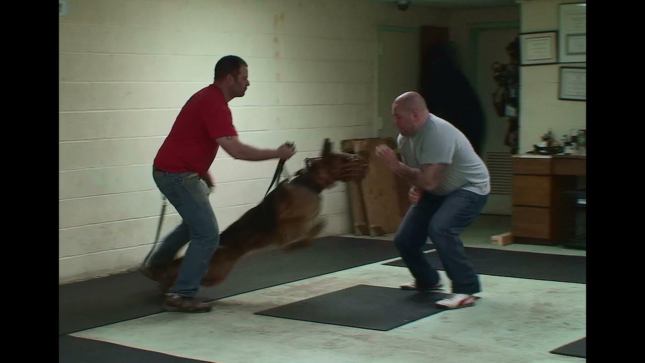 K Dog Training Egypt