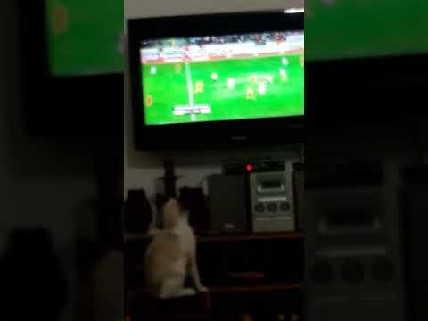 """Mon chat micho suit le match """"Maroc-Gabon"""""""