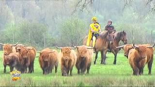 Super Yellow à Abbeville : Western Story avec les animaux de la baie de somme