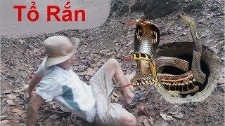 Bắt Rắn .Bắt Được Tổ Rắn Khổng Lồ Thật Không Thể Tin Được .Easy Deep Hole Snake Trap .Bắt Cua Đồng