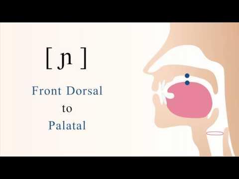 [ ɲ ] voiced front dorsal palatal nasal stop